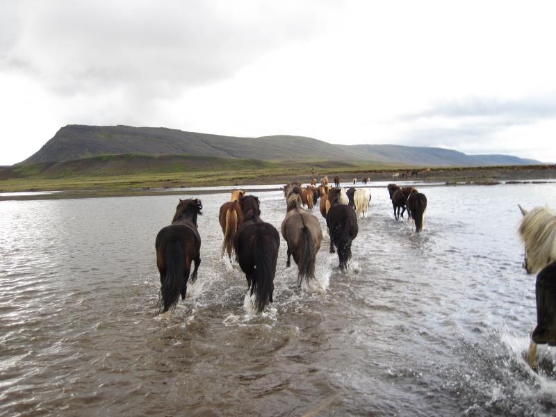 Islandpferd_geschichte 2