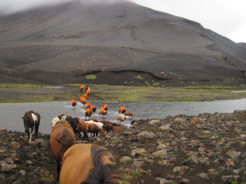 Islandpferd_geschichte
