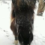 Schnee Sida will auch fotografiert werden