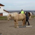 Einmal rund ums Pferd