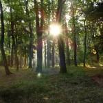 sonnenaufgang-im-maerchenwald