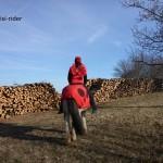 Auch Marienkäfer können reiten