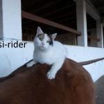 Wer sagt Katzen können nicht reiten