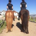 Keine weitere Pferdebeschreibung notwendig