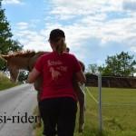 Fohlenshuttle auf die Weide