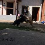 Hundeumarmung
