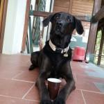 Kaffee Security