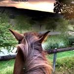 Morgenstimmung am Pferd