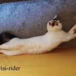 Wie groß ist die Katze - sooo groß