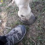 Zeigt her eure Füße... zeigt her eure Schuh...