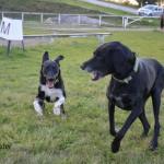 Lulu und Dory