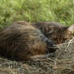 Katzenentspannung pur