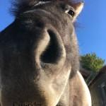 Soooo ein neugieriges Pferd