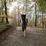 Da steht ein Pferd im Wald