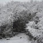 Schnee7
