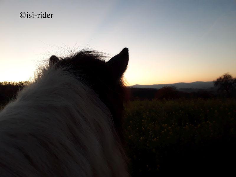 Sonnenuntergang mit Pferd ist immer traumhaft schön