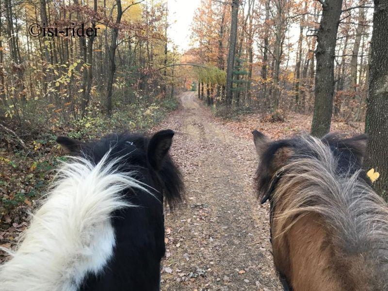 Zwei Schecken im herbstlichen Wald