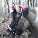 Ein Weihnachtspferd im Wald