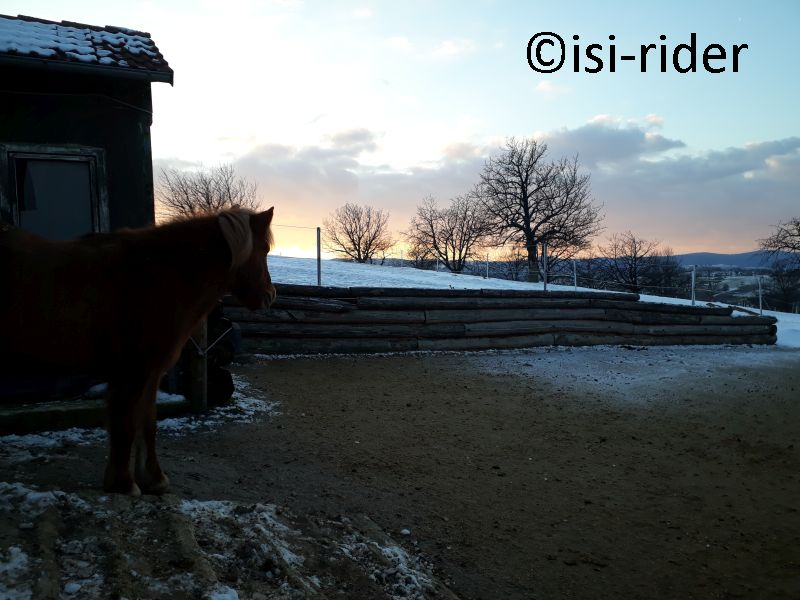 Lolo beobachtetet den Sonnenuntergang