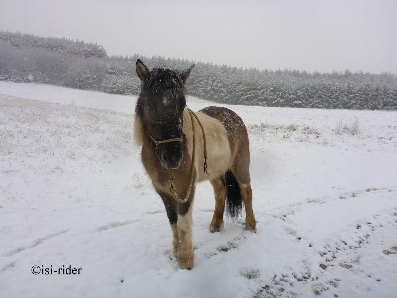 Schnee (7)