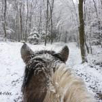 Schnee (8)