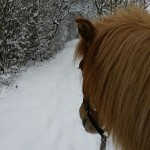 Schnee12