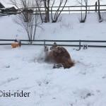 Schnee15