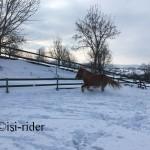 Schnee17